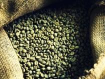 Зеленый кофе— это бесполезный для похудения продукт