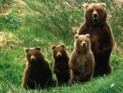Дети в интернете: обзор игр про «Медведей-соседей»