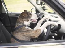 Europcar начнет распознавать паспорта и водительские права