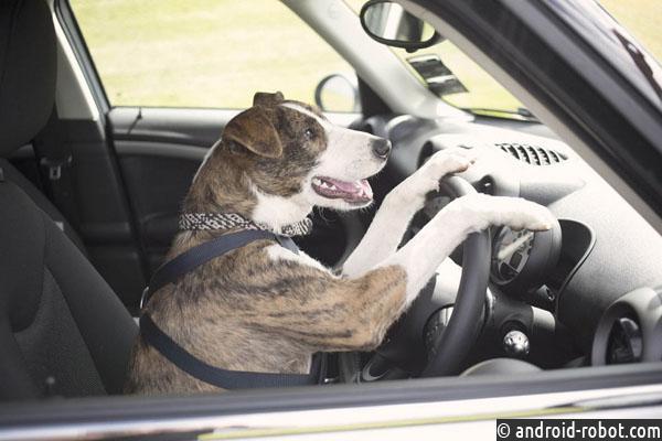 Поющий брянский пес-водитель стал звездой Интернета