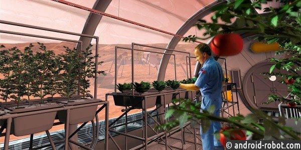 Голландским ученым удалось собрать урожай 10 культур с«марсианского грунта»