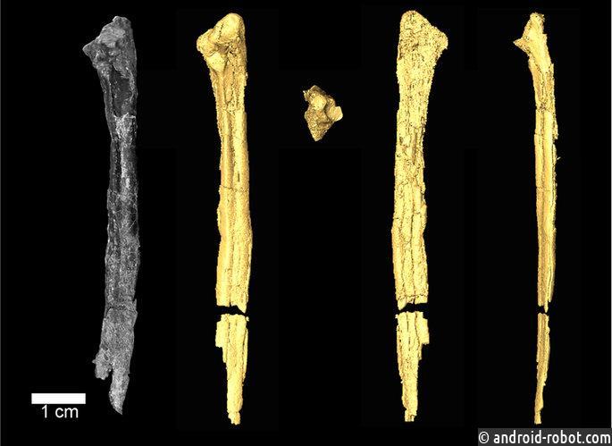 ВАрктике отыскали зубастую птичку возрастом 90 млн лет