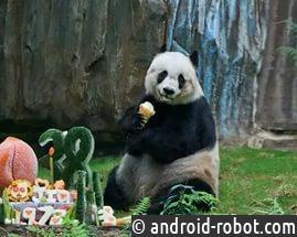 В КНР скончался старейший самец панды вмире