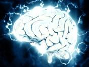 ВСША вырастили навсе 100% искусственный мозг