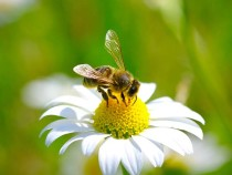 Ученые создали заменяющих пчел дроны-опылители