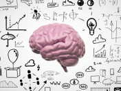 Ученые обнаружили новую функцию мозжечка