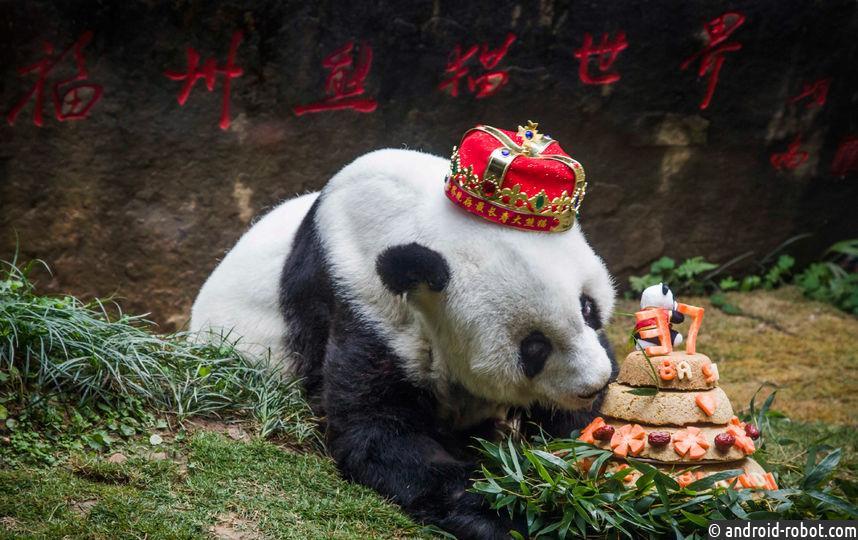 В КНР погибла самая старая вмире панда