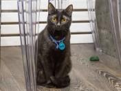 Вглобальной web-сети собирают деньги на монумент «космической кошке» Фелисетт