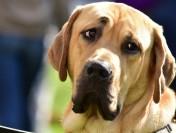 Собаки разговаривают слюдьми при помощи мимики, сообщили ученые