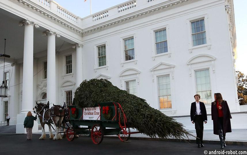 Мелания Трамп ссыном встретили рождественскую елку