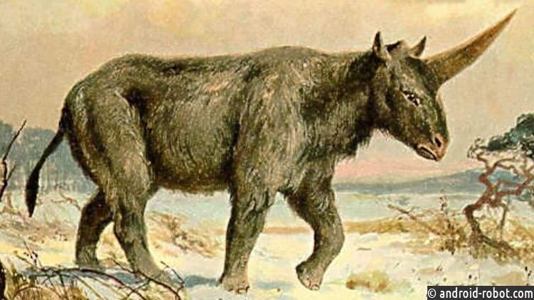 Останки древнего единорога отыскали вПавлодарской области