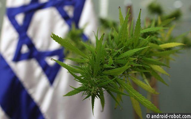 Израиль может стать крупнейшим экспортером медицинской марихуаны
