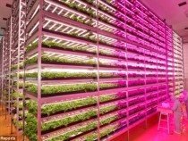 Роботизированная ферма будет выращивать салат самостоятельно