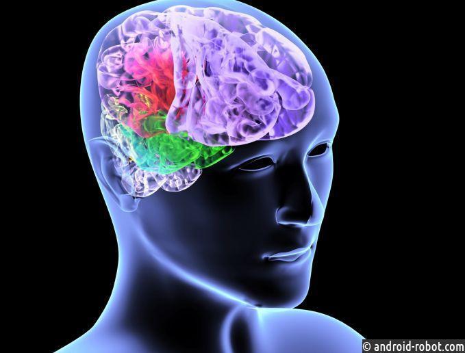 Иммунные клетки помогут восстановиться после инсульта— Ученые