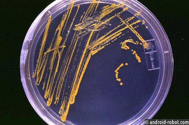 Иркутские ученые открыли бактерии для выработки новых антибиотиков