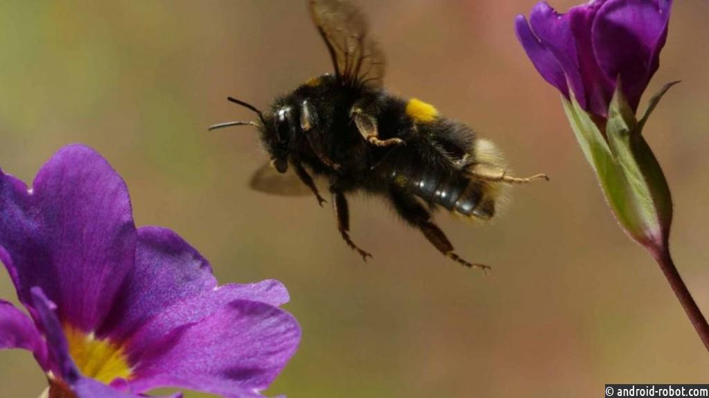 Пчелы владеют восприимчивостью кэлектрическому полю— Биологи