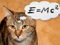 «Уши больше некуда!»: Британский ученый получил Шнобелевскую премию поанатомии