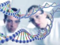 Спокойное состояние стволовых клеток сохраняет регенеративную способность в стареющем мозге