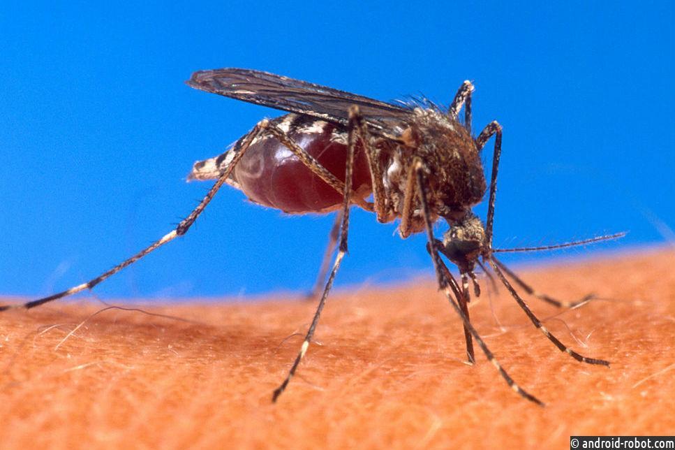 ВМайами обнаружили зону заражения вирусом Зика
