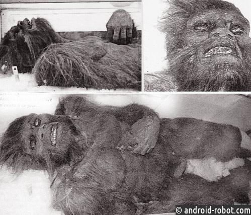 Найдено тело снежного человека Йети - ученые