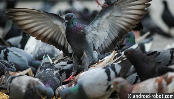 Ученые узнали, что голуби умеют читать