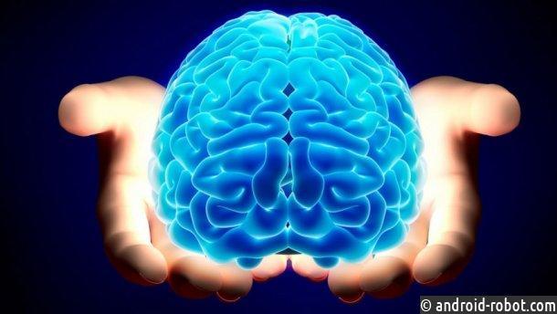 Английские ученые вырастили искусственные мозги влаборатории