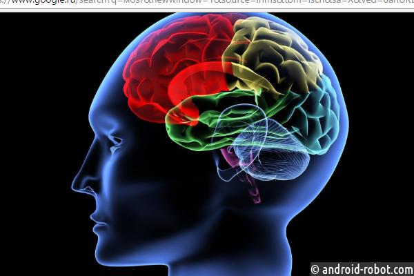 Нижегородские учёные вырастили мозги впробирке