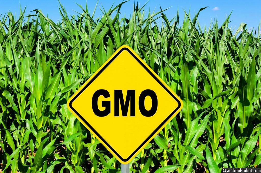 Американские учёные утверждают, что ГМО не опасны для человека