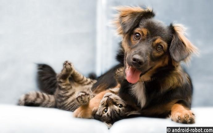 Кошки неглупее собак