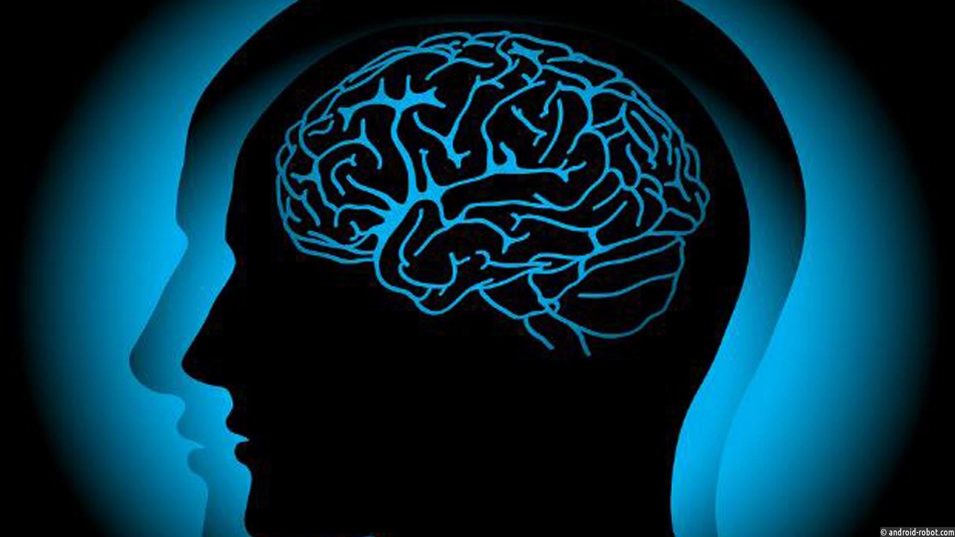 Почему усовременного человека большой мозг