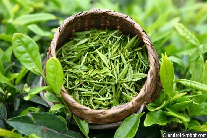 Ученые признали зеленый чай лекарством отрака