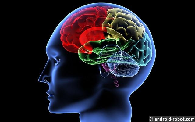 Мозг смелых людей имеет свои особенности