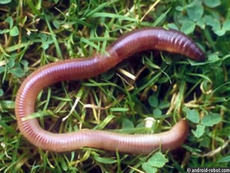 Русский ученый создалкосметику изпомета червей