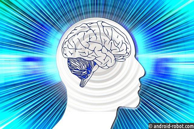 У глупых людей может быть большой мозг