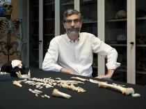 Мозг неандертальца развивался медленнее, чем мозг современного человека