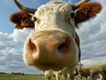 Ученые выяснили вред отзаменителей молока