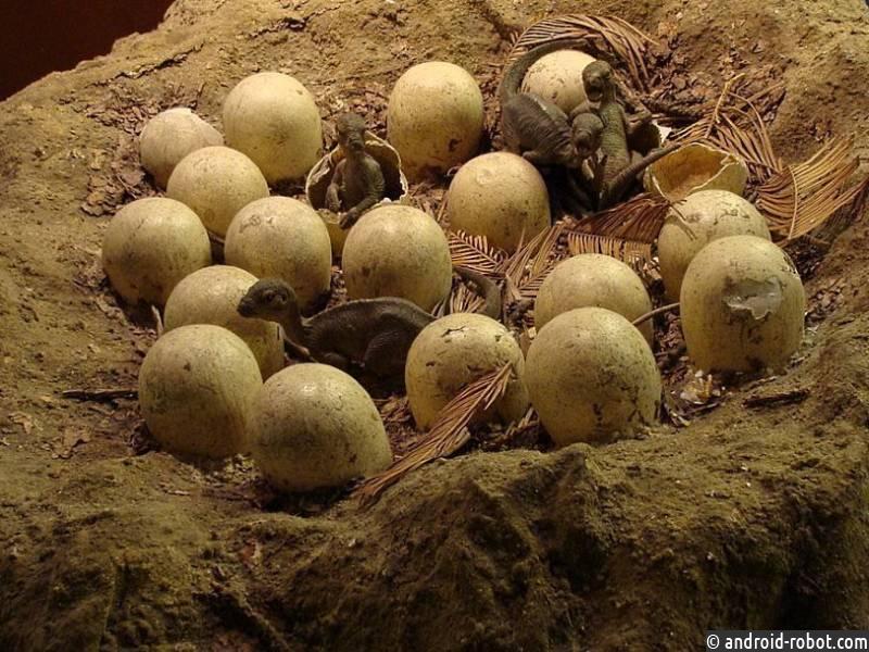 ВКитае найдена кладка яиц динозавров