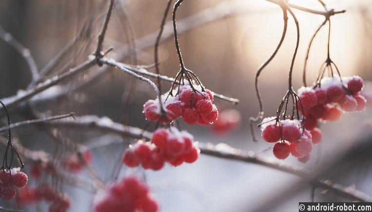 Морозы до-15 градусов придут в столицу Российской Федерации наСтарый Новый год