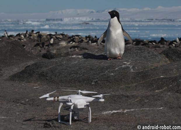 Найдена 1,5 миллионная популяция пингвинов