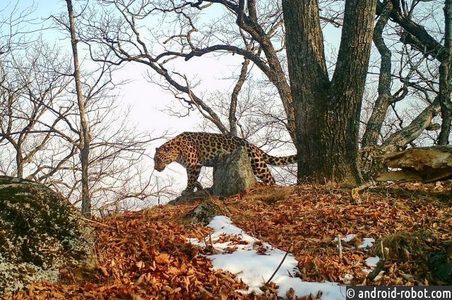 Памелу Андерсон обрадовала новость опоявлении внука у«крестницы»-леопарда»»