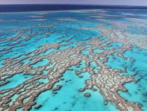 Большой Барьерный Риф показывает значительные признаки восстановления