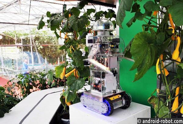 Робот-садовник демонстрирует свои навыки в автоматизации тепличного труда