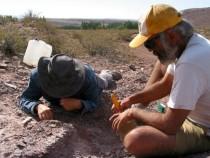 Палеонтологи открыли новый вид динозавров в Аргентине