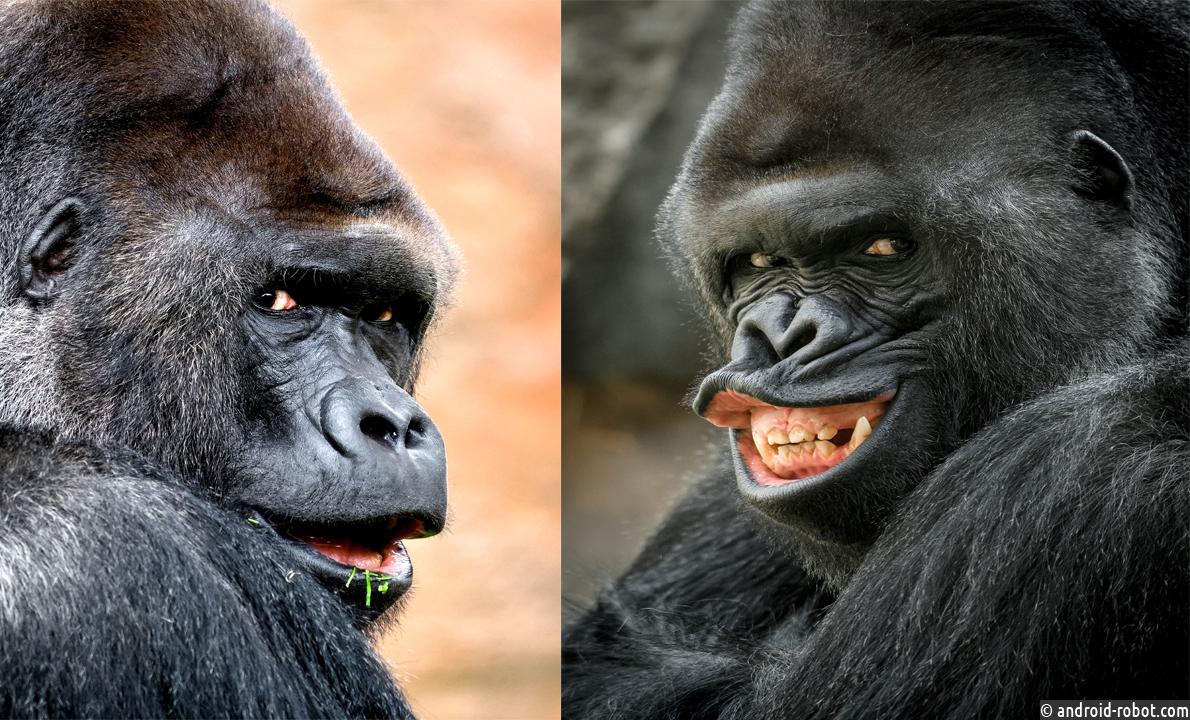 оснащения картинки гориллы приколы изготовлению новогодней открытки