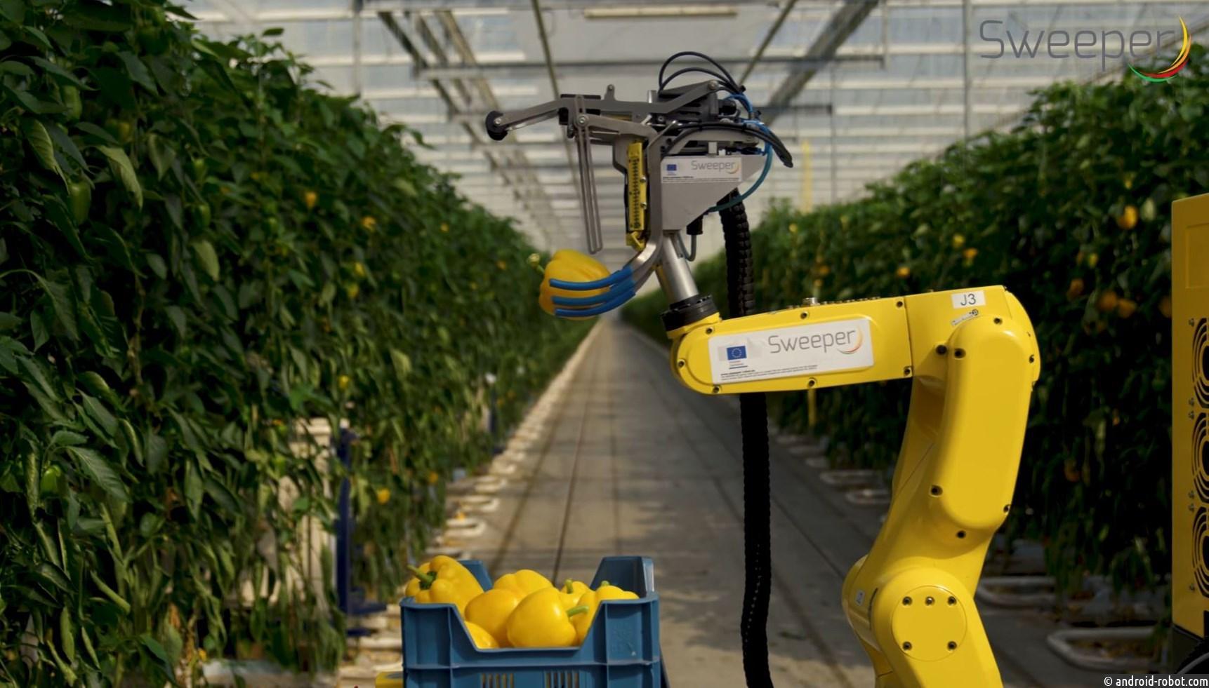 Новый робот для сбора перца может работать 20 часов в день
