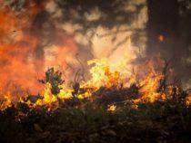 Почему крупные лесные пожары не могут быть большой угрозой для некоторых животных