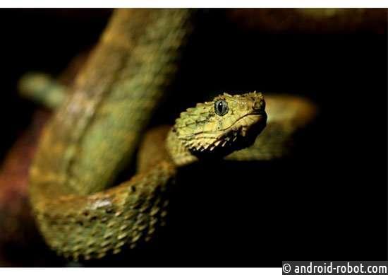 Почему некоторые змеи смертельнее других?