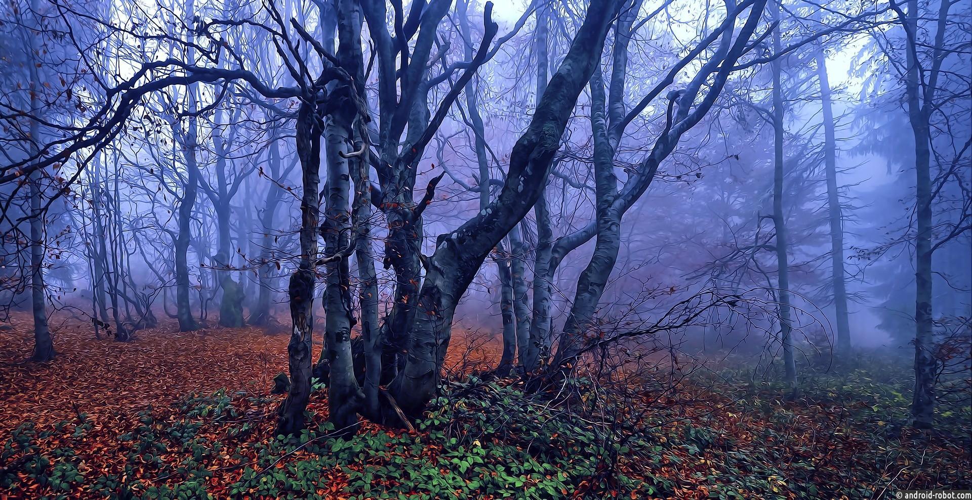 Буковые деревья умирают