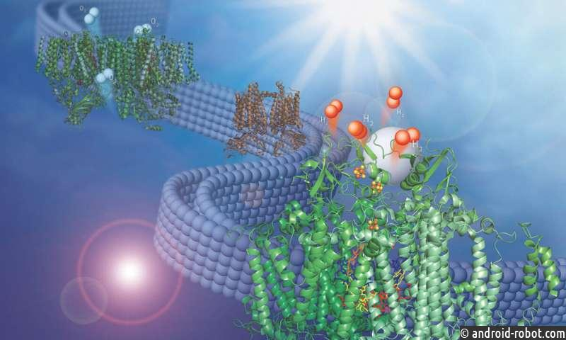 Discovery адаптирует природную мембрану для производства водородного топлива из воды