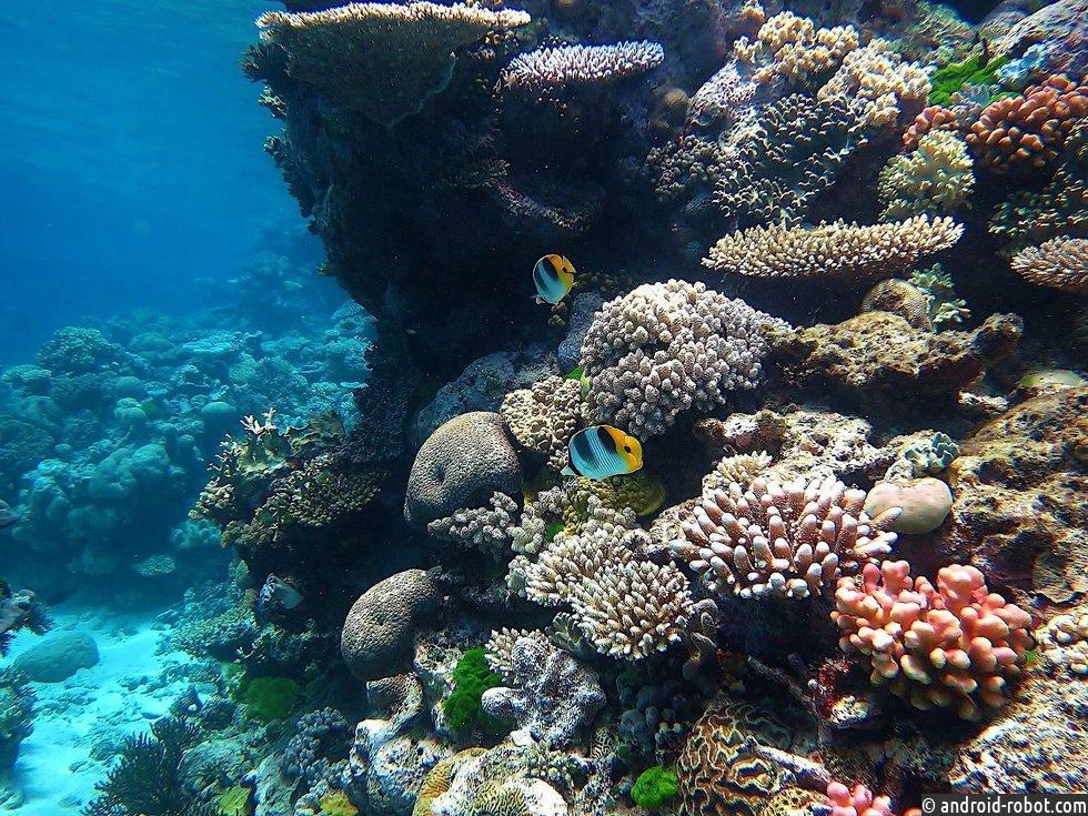 Робот доставляет личинки кораллов на Большой Барьерный риф